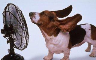 На заметку собаководам: как собаки переносят жару и как им помочь?