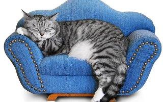 Катавасия: распространенные проблемы содержания котов в доме