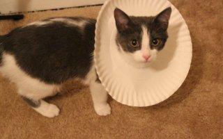 Для чего необходим воротник для кошки?