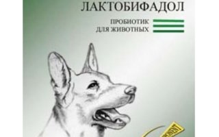 Когда назначается Лактобифадол для собак?