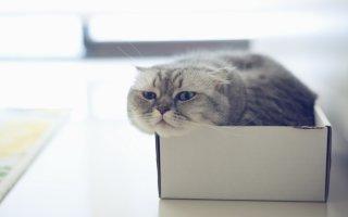 Страсть котов к коробкам и ее обоснованные причины