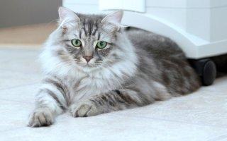 Кошкотерапия: правда и вымысел о лечении людей кошками