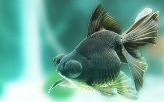 Телескоп – рыбка с незабываемыми глазами