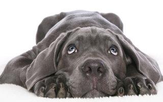 Все о продолжительной жизни собак
