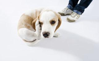 Обзор лечебных средств для собак Барс