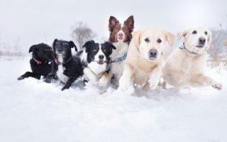 Рейтинг популярных пород собак