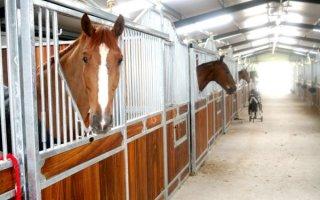 Мастер-класс по строительству конюшни и загона для лошадей