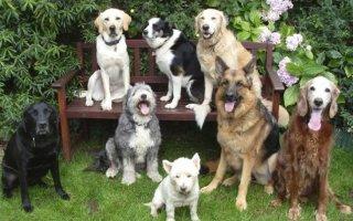 Учимся определять породу собаки