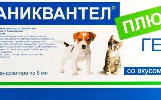 Гроза паразитов – особенности препарата для собак Каниквантел