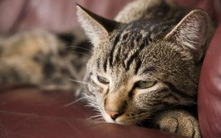 Сахарный диабет – им тоже болеют кошки