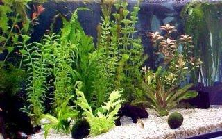Первый шаг в запуске аквариума – отстаивание воды