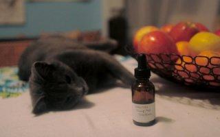 Валерьянка – настоящая страсть кошек