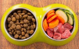 Какой должна быть еда для кошек?