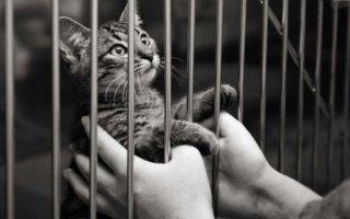 Кошачий приют – временный дом, неизбежность или спасение от гибели?