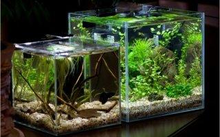 Настольный аквариум – мечта начинающего аквариумиста