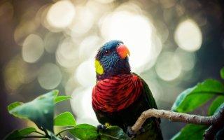 Веселые и нарядные попугайчики Лори