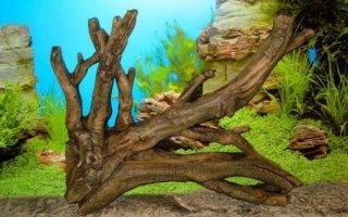 Коряги – украшение и неотъемлемый атрибут аквариума