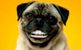 Раскрываем все секреты собачьих зубов
