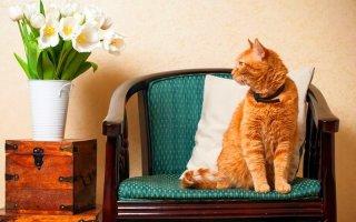 Как правильно пользоваться кошачьим ошейником от блох