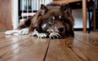 Вялость и отсутствие аппетита у любимой собаки: что делать?