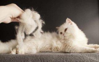 Как избавиться от кошачих колтунов?