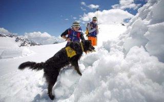 Собаки-спасатели придут на помощь: их «служба и опасна, и трудна»