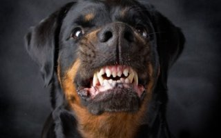 Для тех кто боится – отпугиватель собак