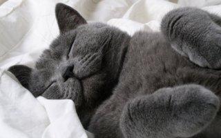 Секреты кошачьего сна