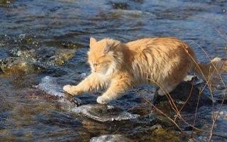 Откуда у кошек боязнь воды и как помочь усатым охотницам полюбить ее?
