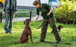 Раскрываем секреты успешного воспитания собаки