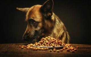 Диарея у собаки: как помочь питомцу побороть деликатную проблему?