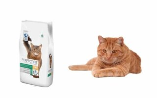 Что ветеринары говорят о кошачем корме Perfect Fit?