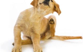 Больше собака чесаться не будет или все о каплях Адвокат