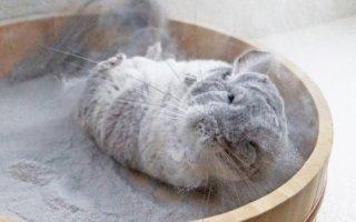 Купалка с песком – необходимая вещь в клетке шиншиллы