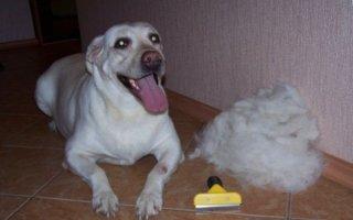 Новинка зооиндустрии – фурминатор для собак
