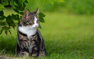 Куда лучше отдать кошку?