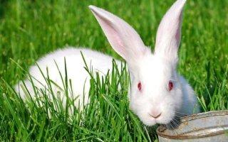 Какую траву разрешается давать декоративному кролику?