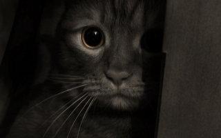 Рак у кошек: советы опытных онкологов