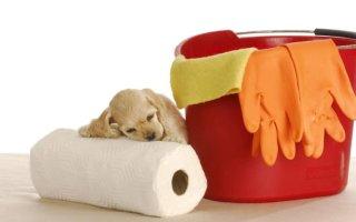 Учим щенка пользоваться пеленками для туалета