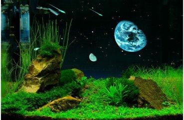 Как сделать фон для аквариума