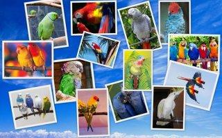 Птица-говорун или какие попугаи разговаривают