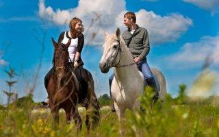 Катание на лошадях в Подмосковье: краткий экскурс