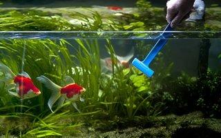 Как правильно ухаживать за домашним аквариумом?