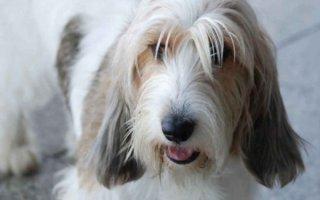 Породы охотничьих собак, о которых вы, возможно, не слышали