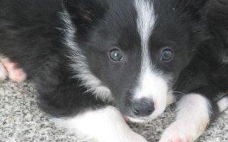 Преданные и нежные собаки русского происхождения – Русско-европейские лайки