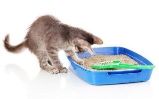 Пошаговое руководство по приучению котенка и взрослого кота к лотку