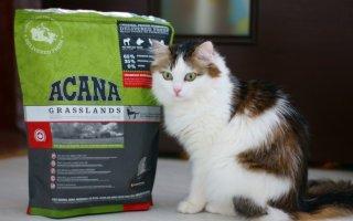 Биологически адаптированная еда для кошек с канадским качеством – корма Acana