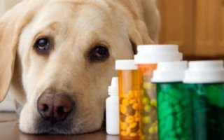 Фоспасим и Тронцил: эффективные препараты для ваших песиков