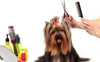 Груминг собак – это не только красиво, но и полезно