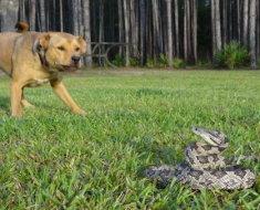 Пес увидел змею